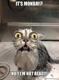 Monday Cat Meme - it s monday no i m not ready cat bath make a meme