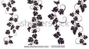 vine vector grape vine