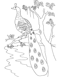 bird peacock coloring pages free printable coloring pages 10