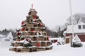 new england u0027s crazy christmas tree tradition
