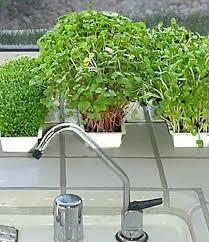 Gardening Trends 2017 31 Best Gardening Trends 2017 Images On Pinterest Gardening