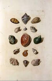 the collected interior vintage printable sea shell prints