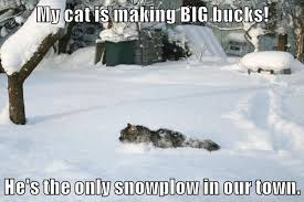 Funny Snow Memes - lolcats snow lol at funny cat memes funny cat pictures with