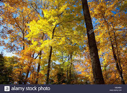Wisconsin Forest images Forest along raven nature trail northern highland american legion jpg