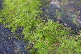 Moss Cleaner For Patios How To Use Tide Detergent For Moss Removal Hunker