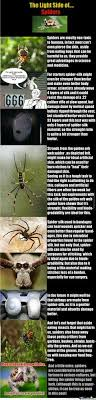 Spider Meme Misunderstood Spider Meme - holy crap i would cut my hair off if that happened to me funny