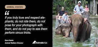 Elephant Meme - don t be fooled into elephant abuse