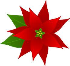 christmas flowers christmas poinsettia flower free clip