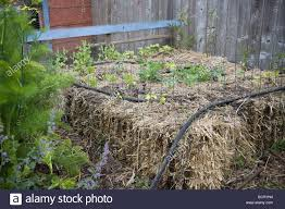 Raised Rock Garden by Hay Bale And Compost Raised Bed Vegetable Bed Wiht Soaker Hose In