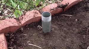 hops trellis for a home garden youtube