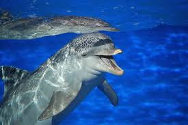 dolphin snatches ipad away from seaworld visitor taking a photo