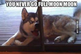 Moon Moon Memes - moon moon teh meme wiki fandom powered by wikia