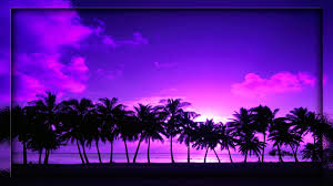 sunset palm tree wallpaper projects try pinterest