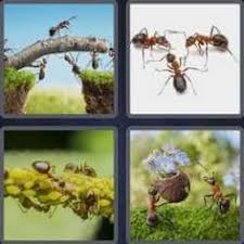 4 pics 1 word game hack for 5 letters 4pics1word 5letters