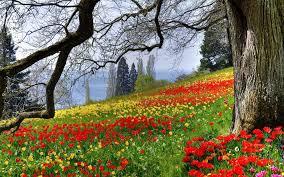 flowers green red spring yellow meadow wildflower wildflowers