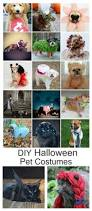 diy dog and cat costume ideas the idea room