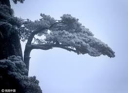 snow of season blankets many parts of china 1 chinadaily