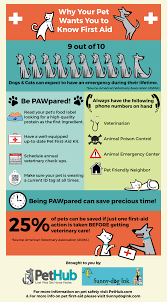 australian shepherd quiz take this quiz on pet first aid u2013 knowing this information could