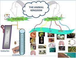 Map Of Animal Kingdom Social U0026 Natural Science English Year 2 Seneca The Animal
