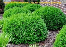 Small Shrubs For Front Yard - 25 unique boxwood shrub ideas on pinterest boxwood bush low