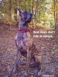 Great Dane Meme - all i care about is my great dane and maybe three people it s the