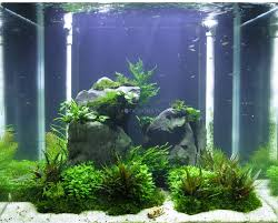 Planted Aquarium Aquascaping 8 Best Aquascaping Images On Pinterest Aquascaping Aquariums