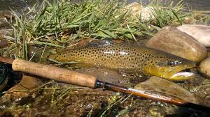 brown streamers fishing with streamers 101 best months for streamer fishing