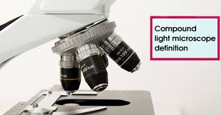compound light microscope uses compound light microscope definition jpg
