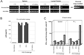 Challenge Hiv Protection From Hiv 1 Challenge Of Hu Pbl Scid Mice Vaccinated With