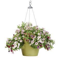 self watering planters self watering planter reviews good