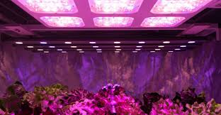 how to build a led grow light diy led grow light how to make one on your own