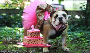 dog birthday party how to plan the best dog birthday party
