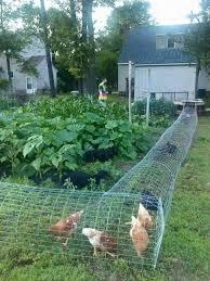 Backyard Chicken Coop Ideas How To Build A Diy Backyard Chicken Tunnel Backyard Chickens