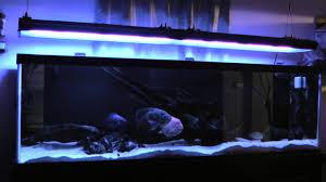 Led Aquarium Light Fixtures Aquaticlife T5 Ho 72 12 Bulb Light Fixture Review