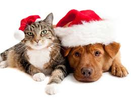 pet christmas survey results are in celebrating with your pet dogtime