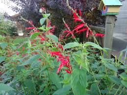 its november and flowers are still blooming that bloomin u0027 garden