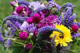 petaled shades of purple
