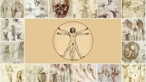 leonardo da vinci human anatomy drawings hd wallpaper