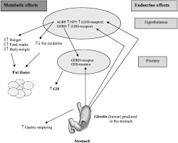 endocrine regulation of energy metabolism review of