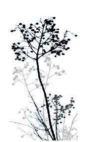 nature design black and white digital by powell