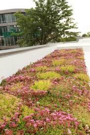 the roof seating area and green roof green roofs gardens w