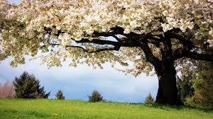 money grows on trees tharyn s