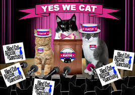 Blind Cat Sanctuary And The Winner Of Zee U0026 Zoey U0027s Cat Ruler Of The World Contest And