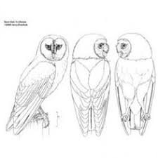 patterns for owl relief wood carving google search wood