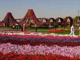 largest flower garden in the world miracle gardens dubai