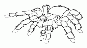 coloring page of a spider kids coloring