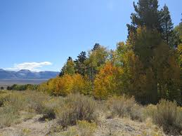 mono logue blog archive fall splendor mono basin