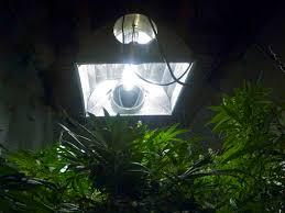 chameleon plasma grow lights increase potency u0026 yield for your