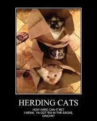 Herding Cats Meme - arroww game page 20 student doctor network