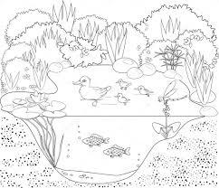 coloring duck pond u2014 stock vector mariaflaya 90866078